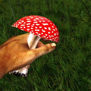 Red_poisonous_mushroom_in_the_hand