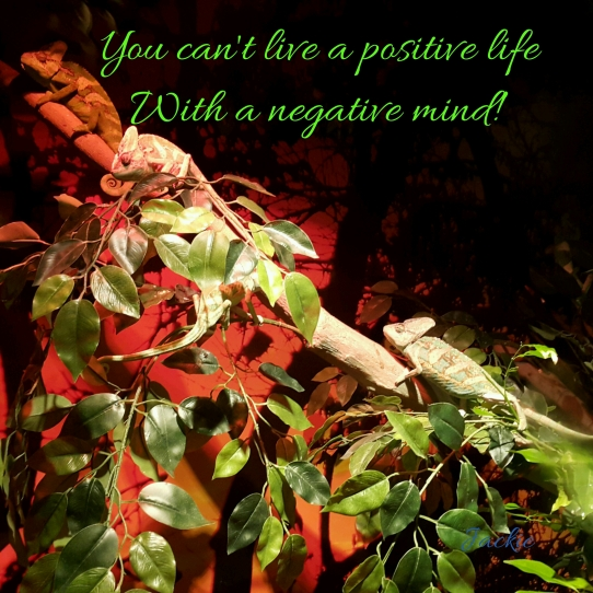 You can't live a positive life with a negative mind. How many chameleons can you see?