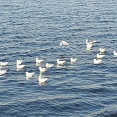 A clutch of sea birds.
