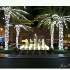 Brightly lit palms