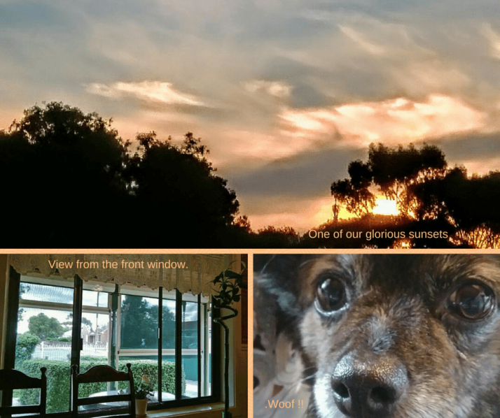 Sunset, view, dog