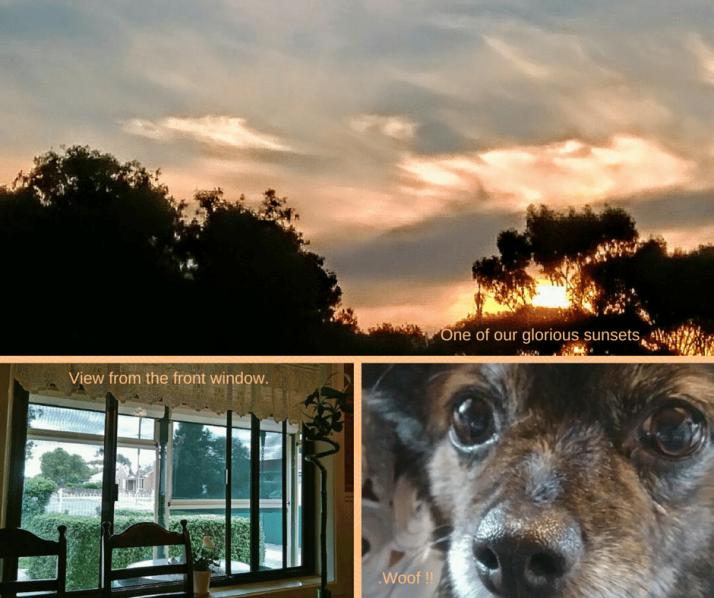 Sunset, view, dog