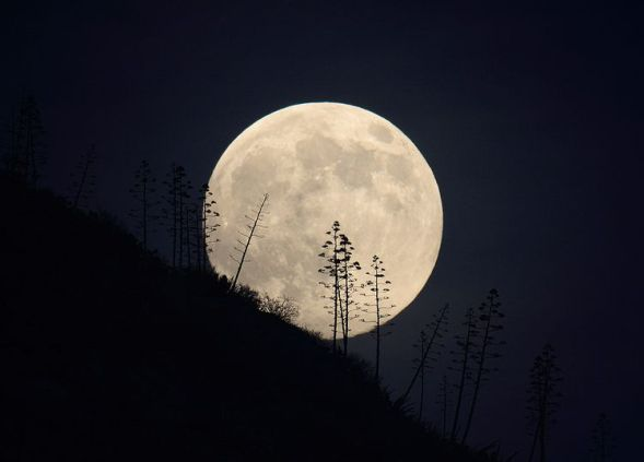Image result for images of full moon and hunter