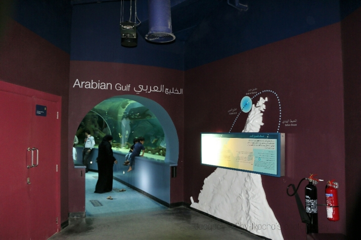 Emirates of Sharjah, Aquarium, Marine Life, Echoes of my neighbourhood, Beautiful, Nature,
