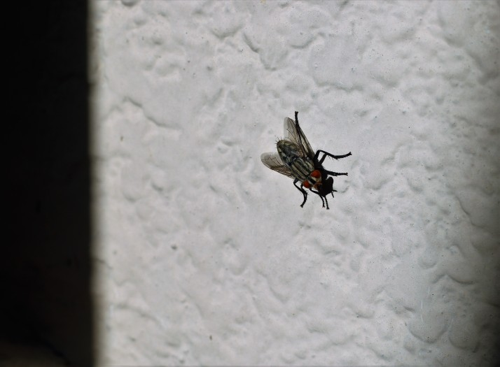 Fly, photograph, beauty in mundane things