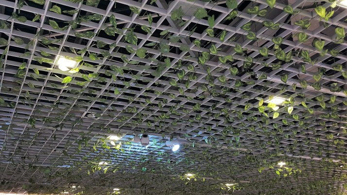 Ceiling grid, photos, beautiful