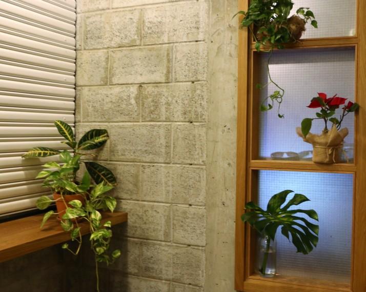 Room decor, Nature, Life, Green