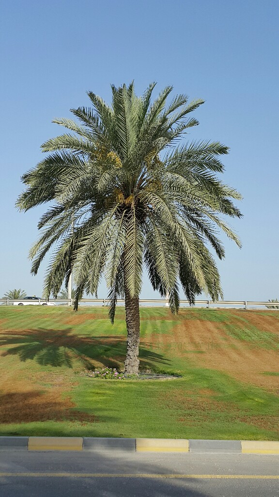 Earth, Date Palm Tree, Nature, Giving, Mother Earth, Fullness