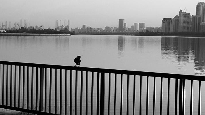 Bird, Waterside, Monochrome, Cityscape, Photograph