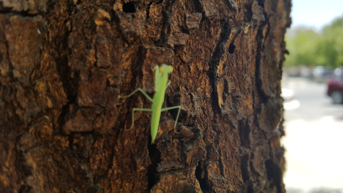 Nature, insects, life, quote, photograph