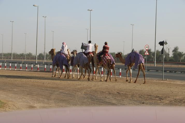Migratory, Transient, Nomads, Camels