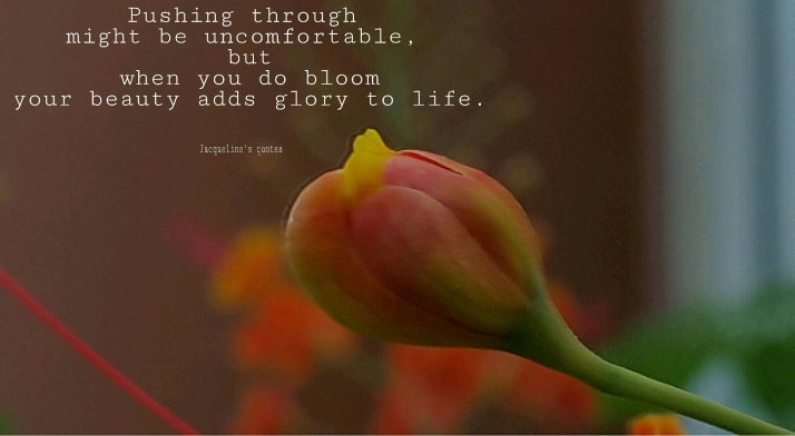 Lifequotes, Jacqueline's quotes, bloom, succeed, photograph, flower