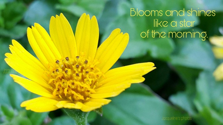 Sunflower, Bloom, Pretty, Haiku, Photography