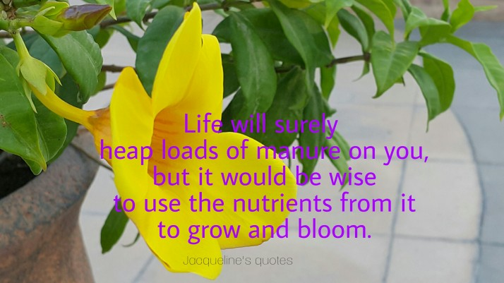 Life quotes, Jacqueline's quotes, life, bloom and grow