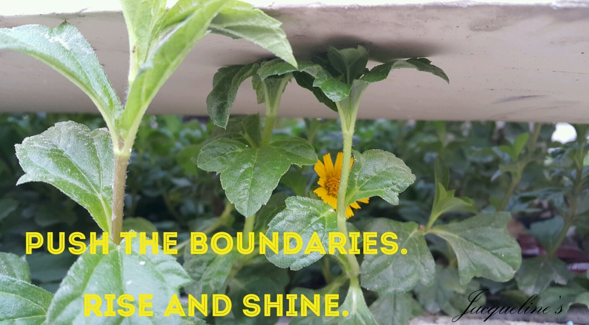 quotes, flowers, push the boundaries, success, growth, motivation, inspiration, resilience