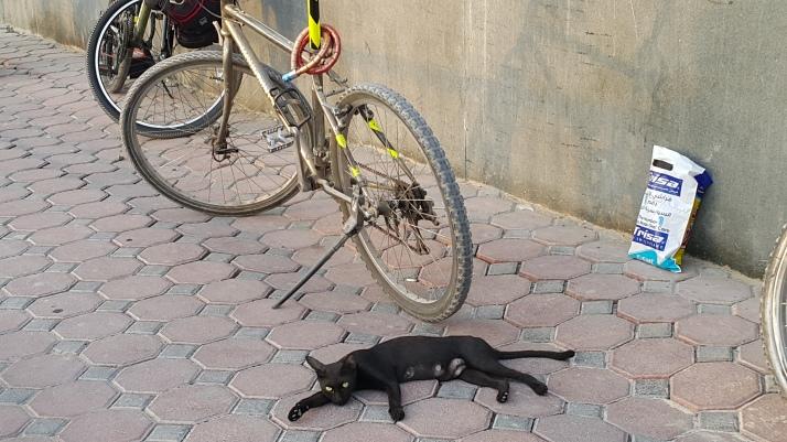Cat, Lazy, Photography, Sprawled, Heat,