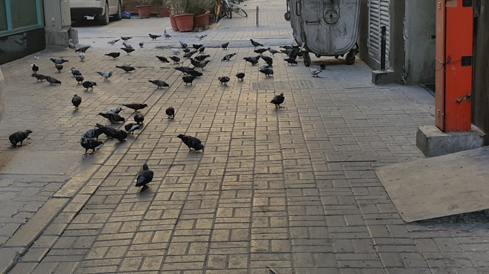 Pigeons, Flock, Nature, Feeding Birds, Photographs
