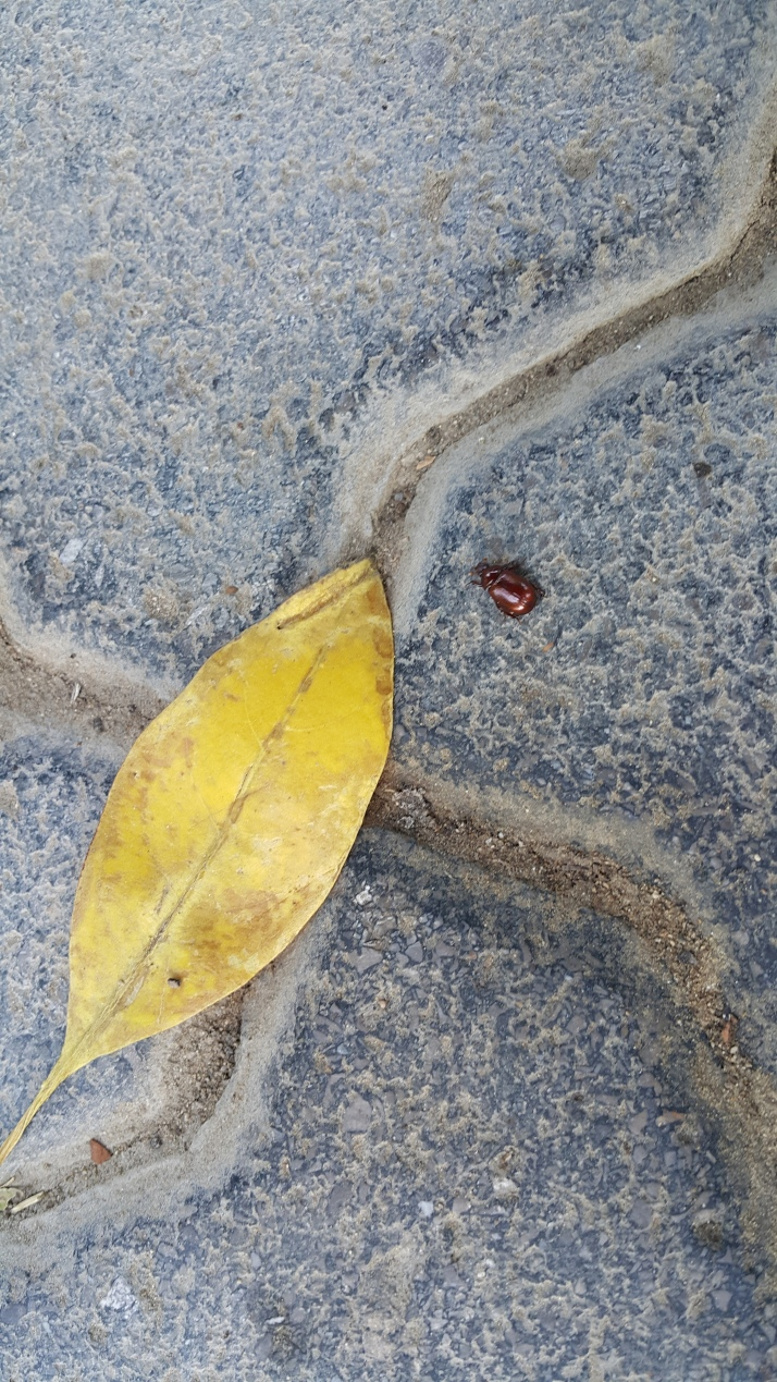 Nature, Plant, Bug, Fall, Beautiful