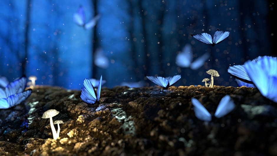 Butterflies, Blue, Fantasy