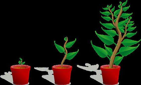 Sapling, Growing