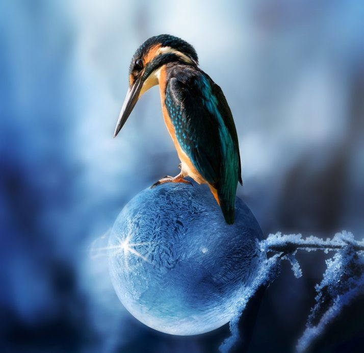 animal-avian-beak-bubble